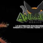 ANIMALIA PRIMAVERA 2017